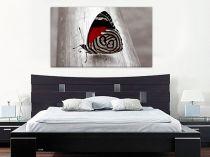 """Картина пано """"Пеперуда"""", 120 * 70 см 6827 - Pochehli"""