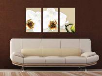 """Картина пано """"Бяла орхидея"""" 6215 - Pochehli"""